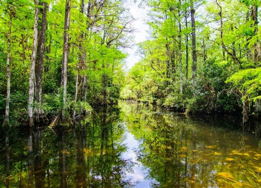 Discover the Florida Everglades: Facts, Fun and Fascinating History —  Naples Florida Travel Guide